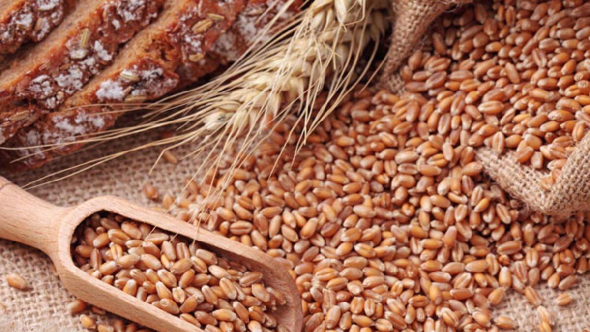 kırmızı-sert-buğday